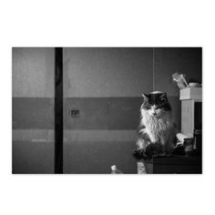 Champ March 2015 #cat #blackandwhitephotography