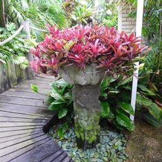 Tropical Garden Design, Tropical Landscaping, Landscaping Plants, Tropical Plants, Garden Planters, Succulents Garden, Amazing Gardens, Beautiful Gardens, Balinese Garden