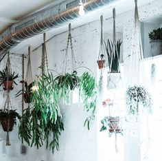 Photographer & Graphic Designer based in Berlin Berlin, Hanging Planters, Conservatory, Plant Hanger, Boho Style, Boho Fashion, Flora, Wedding Decorations, Wreaths