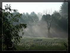 THROUGH THE MIST - that early morning mist highlighting the new sun shining though the trees