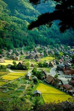 """This is """" #Tokyo """", kinda surprise right?? Tokyo is where really the mix of tradition and modern co-exists.  #Japan #countryside"""