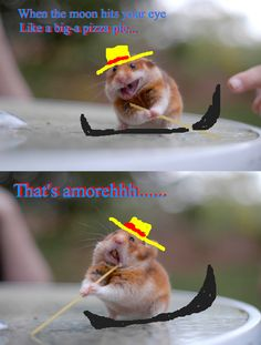 When the moon hits your eye, like a big-a pizza pie...That's amorehhhh..... funny hamster venetian gondola