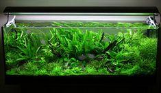 Lush Planted Aquarium