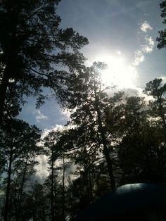Through the trees :)