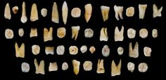 47 human teeth found from the Fuyan Cave, Daoxian