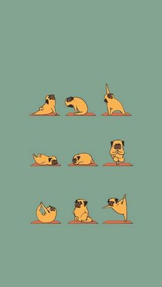 Funny Pug Doing Yoga  #iPhone #5s #wallpaper