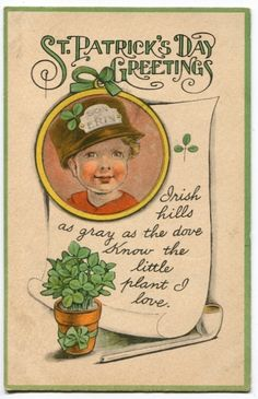 "Great St Patrick's Day postcard: ""Iriah hills as gray as the dove know the little plant I love (shamrock)"""