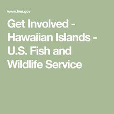 Get Involved - Hawaiian Islands - U. Fish and Wildlife Service Hawaiian Islands, Wildlife, Fish, Projects, Hawaian Islands, Log Projects, Ichthys
