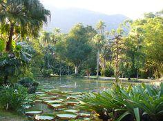 Jardim Botanico/Botanical Garden #riodejanerio #travel