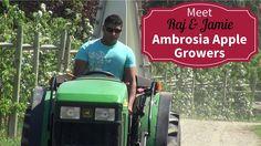 Meet Your BC Ambrosia Apple Growers - Raj and Jamie