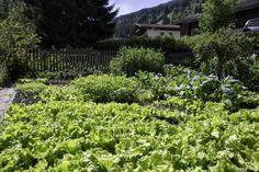 Unterbergerwirt Garten Plants, Summer Vacations, Time Out, River, Waterfall, Hiking, Garten, Flora, Plant
