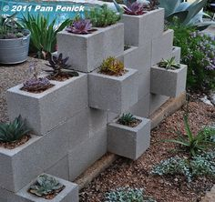 Cinderblock planter wall decorating ideas for cinder block walls best of great idea for inexpensive planters Cinder Block Walls, Cinder Block Garden, Cinder Blocks, Succulent Display, Succulent Wall, Succulent Planters, Cinderblock Planter, Brick Planter, Wall Planters