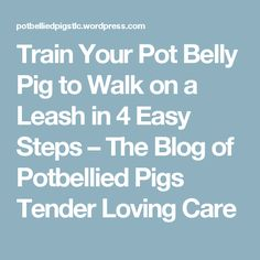 Train Your Pot Belly Pig to Walk on a Leash in 4 Easy Steps – The Blog of Potbellied Pigs Tender Loving Care