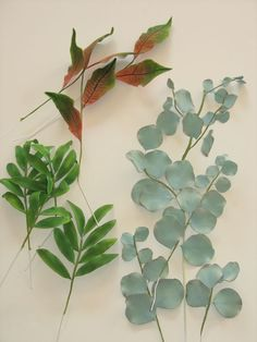 Gumpaste Foliage Croton Palm Leaves Eucalyptus in 2019 Sugar Paste Flowers, Wafer Paper Flowers, Icing Flowers, Fondant Flowers, Clay Flowers, Edible Flowers, Bolo Fondant, Fondant Cakes, Feuille Eucalyptus