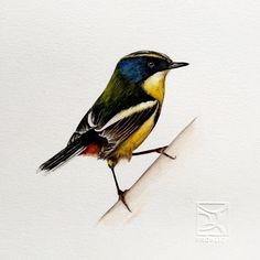 Resultado de imagen para acuarelas watercolor ave