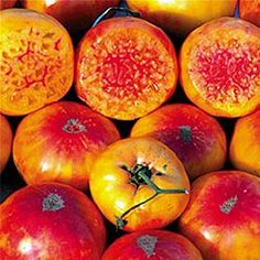 Amazon.com : Hillbilly Tomato Seeds - Produces Rare, Beautiful & Delicious 1-2lb Heirloom Fruits - Hillbilly Seeds : Patio, Lawn & Garden