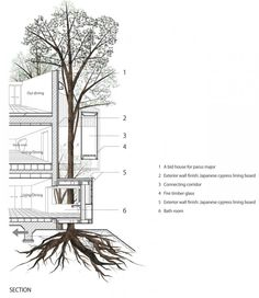 Section: Dancing Trees, Singing Birds / Hiroshi Nakamura - Architectural drawing / rendering / diagram