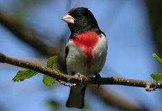 Visits my bird feeder