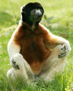 Inspiro, expiro...puedes conseguir nuestro Zafu medialuna para facilitar esta postura en: http://www.yogaye.com/yoga/cojines/zafus-medialuna.html