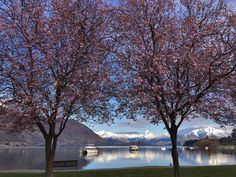 Spring is in the air - the lambs are bleating, the blossoms are blooming and the slopes are still powderific! Here's 7 awesome things to do in spring in the Lake Wanaka region.