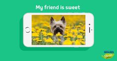 Passeggiata con il cagnolino? Il momento ideale per scattargli una foto per My friend is sweet! http://www.misurastevia.it/page/my-friend-is-sweet #dog #animals #sweet #sweetness #nocalories