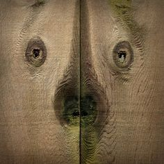 Bear face in wood - photo by -, via Flickr