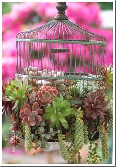 Succulents Caged!