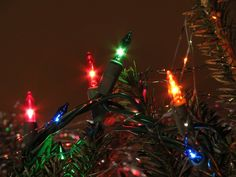Close-up of Christmas lights on a tree : Free Stock Photo