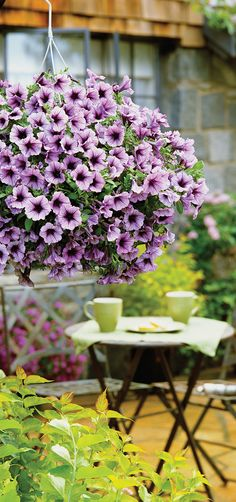 Invite friends into your beautiful backyard this summer! Add a large basket of Supertunia Bordeaux to liven up the space, and for you to enjoy all season long!