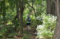 Here are nine great sectional hikes on the Appalachian Trail that can be done in day or less.