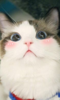 These pretty cats will brighten your day. Cats are fascinating creatures. Cute Baby Cats, Cute Cats And Kittens, Cute Baby Animals, I Love Cats, Crazy Cats, Kittens Cutest, Funny Animals, Bad Cats, Farm Animals