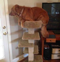 Tu perro siempre te anima a llegar más alto.   23 maneras en las que tu perro te hace una mejor persona