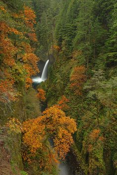 Fall Colors at Metlako Falls on Eagle Creek, Columbia River Gorge National Scenic Area, Oregon Eagle Creek, Columbia River Gorge, Beautiful World, Beautiful Places, Beautiful Pictures, Beautiful Waterfalls, Beautiful Landscapes, Back To Nature, Amazing Nature