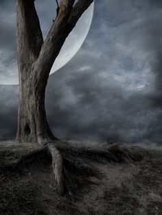 DesertRose,;,Dead Tree and Moon ,;,