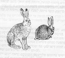 Rabbits. Vintage. Love