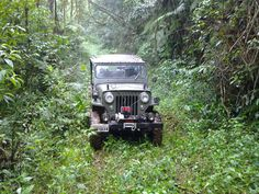1954 Willys CJ-3B - Photo submitted by Sales Reginaldo.