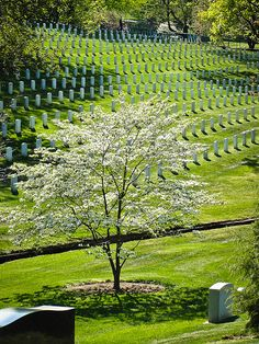 U.S. Arlington National Cemetery, Virginia | Flickr: Tamar Marie