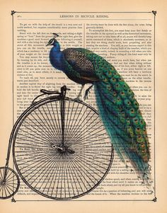 Antique PEACOCK on a vintage PENNY FARTHING bicycle bike illustration beautifully upcycled dictionary page book art print