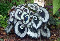 The Escargot Begonia was named from the charming way its leaves curl back into themselves — not unlike the shells of a snail, made all the more vivid by colored bands of pewter, chocolate and green.