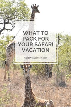 How to Pack Expertly for Your Safari Vacation – The Lovely Lovely