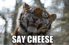 say cheese tara Greene