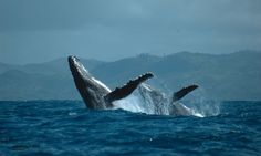 Whale watching off the coast of Madagascar and a safari in Africa is the order of the day...