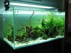 Axolotl ideas! on Pinterest Aquascaping, Aquarium and Amphibians