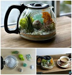 Coffee Pot Terrarium-DIY Mini Fairy Terrarium Garden Ideas