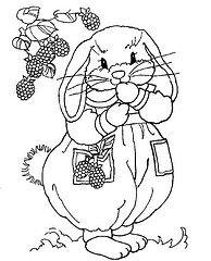 Bunny & Raspberries