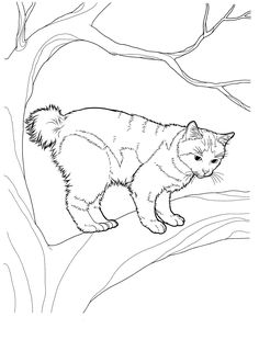 cat_8 Cats coloring pages for teens and adults