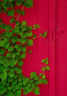 green & ruby red