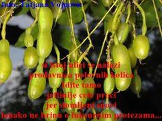 sanja-kohili: Invalidska kolica za sreću/Antiliričnost/ Fruit, Food, The Fruit, Meals, Yemek, Eten