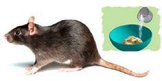 La meilleure méthode pour éliminer les souris une fois pour toutes!