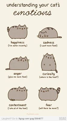 """Ignore the Reasons Why Pusheen The Cat Would Make The Perfect Boyfriend"""". Pusheen is a girl. Lol So True, True True, Fat Cats, Cats And Kittens, Fat Kitty, Kitty Kitty, Cats 101, Crazy Cat Lady, Crazy Cats"""